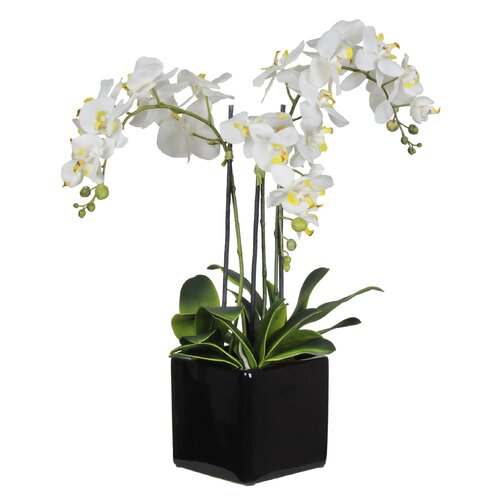 House of Silk Flowers Inc. Artificial Triple-Stem Phalaenopsis Orchid Arrangement in Cube Ceramic Vase