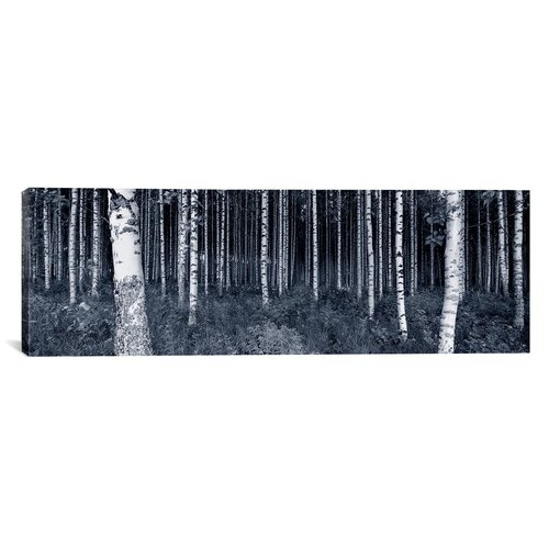 iCanvasArt Panoramic Birch Trees in a Forest, Finland Photographic Print on Canvas