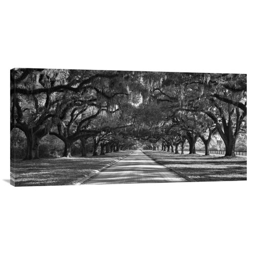 'Live Oaks Along Road' by William Manning Photographic Print on Canvas
