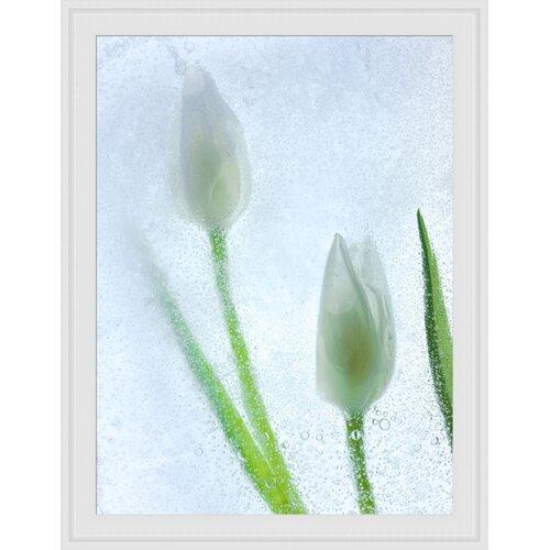 Tulipanes Blancos Framed Graphic Art
