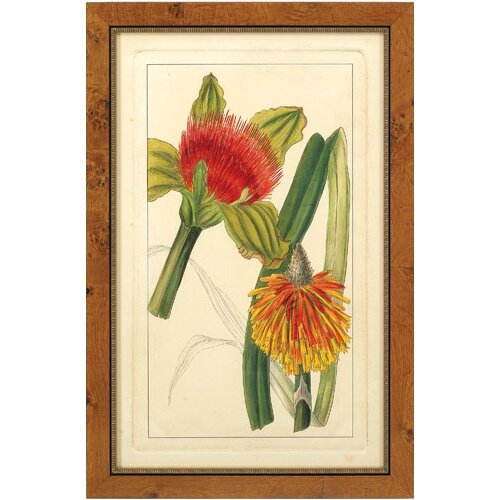 Epic Art Rachel's Tropicals I Framed Graphic Art