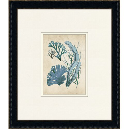 Fitch Sealife III Framed Graphic Art