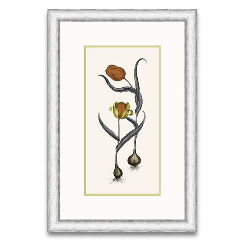 Epic Art Floral Persimmon and Citriana II Framed Graphic Art