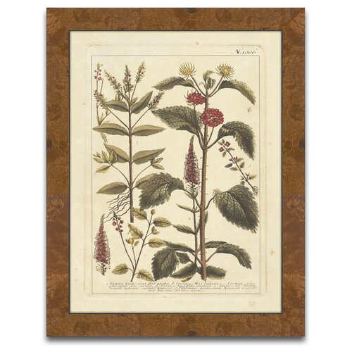 Epic Art The Botanist's Measure Autumn Weinmann V Framed Graphic Art