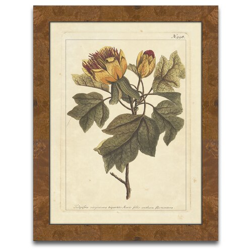 Epic Art The Botanist's Measure Autumn Weinmann VIII Framed Graphic Art
