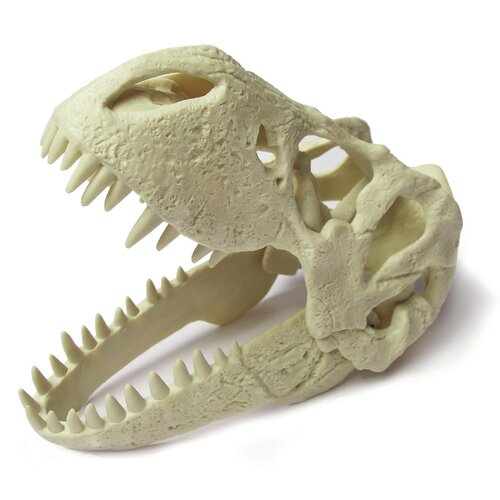 Geo World Dino T-Rex Skull Excavation Kit