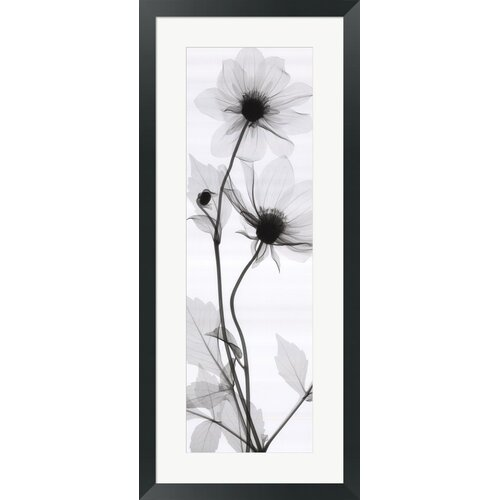 Tall Dahlia by Steven N. Meyers Framed Photographic Print