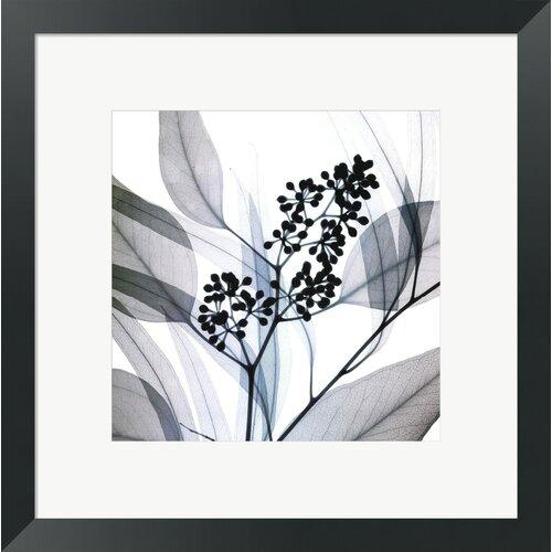 Eucalyptus by Steven N. Meyers Framed Photographic Print
