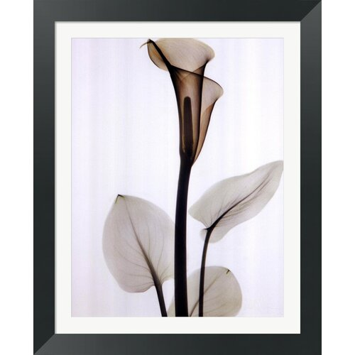 Calla One by Albert Koetsier Framed Photographic Print