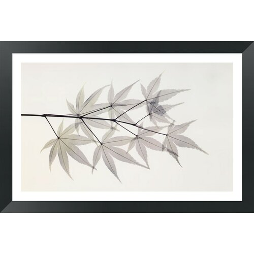 Japanese Maple by Albert Koetsier Framed Graphic Art