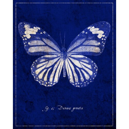 Common Tiger Butterfly Cyanotype by GI ArtLab Graphic Art