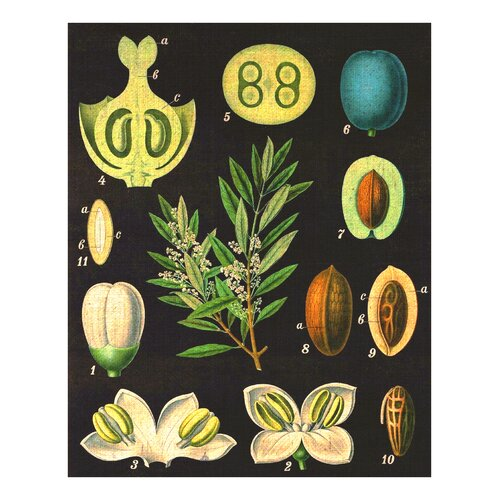Vintage Olives Wall Art (Print Only)