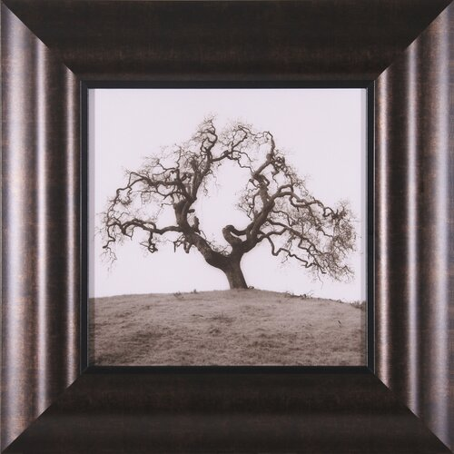 Hillside Oak Tree Framed Photographic Print