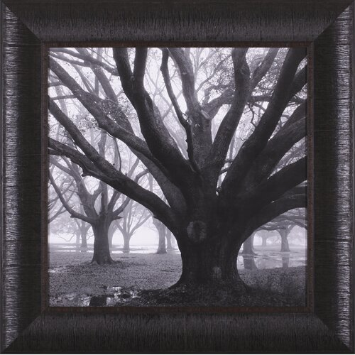 Oak Grove, Winter by William Guion Framed Photographic Print