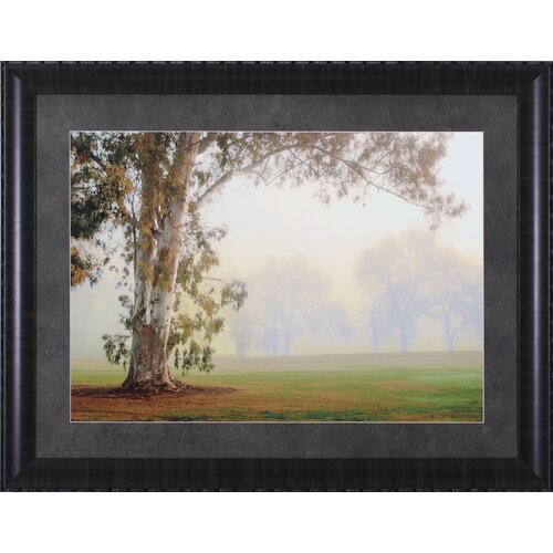 Eucalyptus by Donald Satterlee Framed Photographic Print