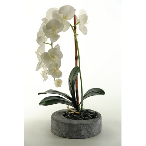 D & W Silks Phael Orchids in Round Stone Planter
