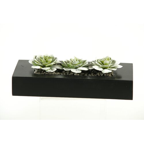 D & W Silks Snow Look Echeveria Succulents  in Planter