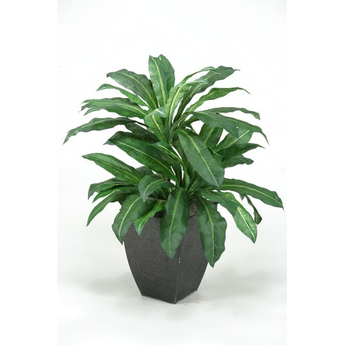 D & W Silks Birdnest Palm Floor Plant in Pot