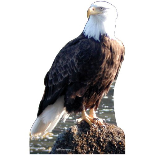 Advanced Graphics Animals Eagle Cardboard Stand-Up