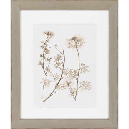 Sepia Nature Study IV by Vision Studio Framed Graphic Art