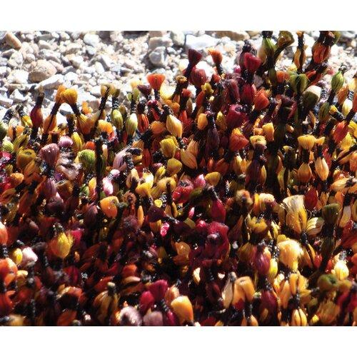 Foreign Accents Elementz Starburst Red/Brown Rug