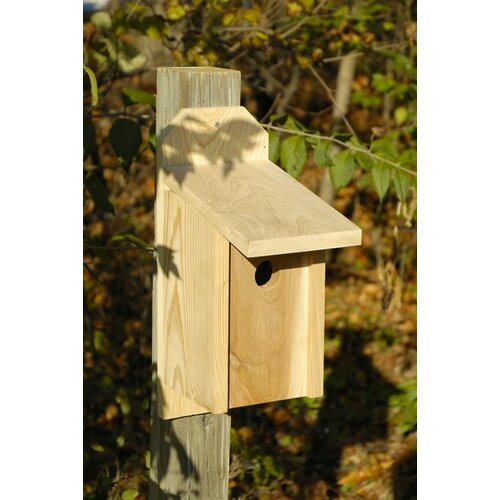 Heartwood Western Blue Bird Bird House