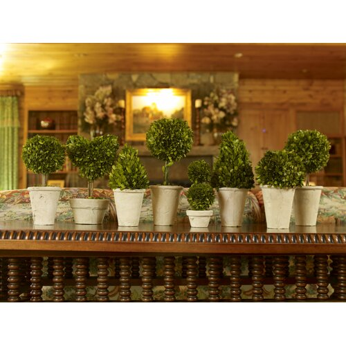 Napa Home and Garden 8 Piece Preserved Boxwoods Topiary in Pot
