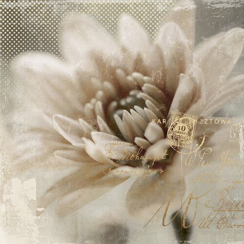 Revealed Artwork Blooming Softly II Graphic Art on Canvas