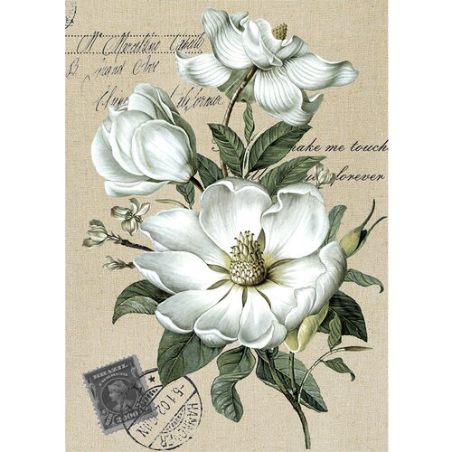 Yosemite Home Decor Revealed Artwork Three Blooms Graphic Art on Canvas