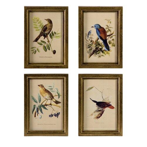 Bird 4 Piece Framed Photographic Print Set