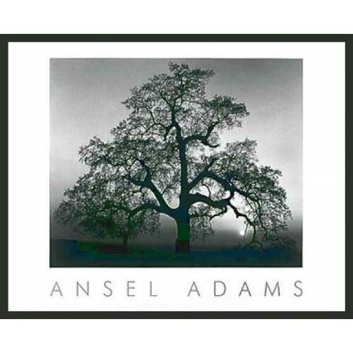'Oak Tree Sunset' by Ansel Adams Framed Photographic Print