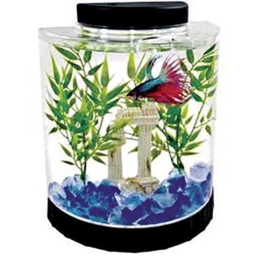 Tetra 1.1 Gallon Half Moon Betta Aquarium Kit