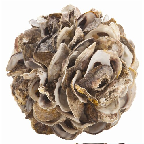 Kosta Authentic Oyster Shell Sphere Figurine