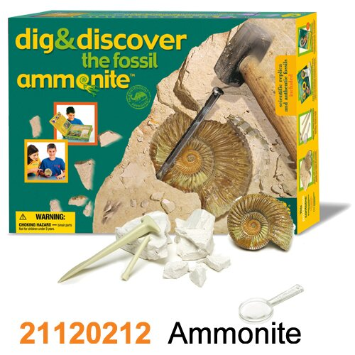 Wild Creations Dig and Discover Ammonite