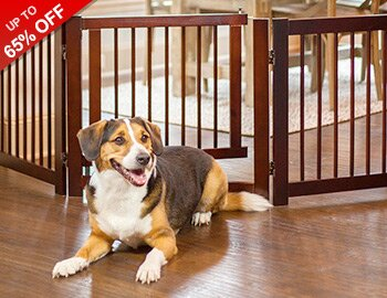 Sit, Stay, Play: Pet Furniture & More