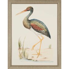 Water Bird II by Meyer Framed Painting Print