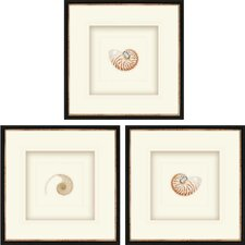 Natural Nautilus 3 Piece Framed Graphic Art Shadow Box Set