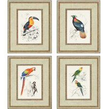 Costa Rica Birds by D'Orbigny 4 Piece Framed Graphic Art Shadow Box Set