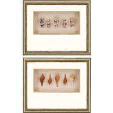Shell 2 Piece Framed Shadow Box Set