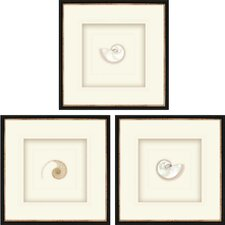 Pearled Nautilus 3 Piece Framed Graphic Art Shadow Box Set