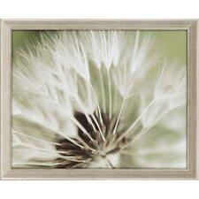 Dandelion I by Miller Framed Photographic Print