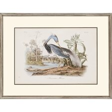 "Audubon Herons by Audubon Traditional Art - 24"" x 31"" (Set of 2)"