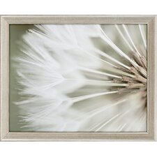 Dandelion IV by Miller Candice Olson Framed Photographic Print