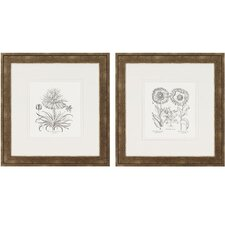 Flower Impressions Tordilion/Corona Framed Print (Set of 2)