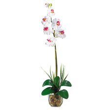 Liquid Illusion Single Phalaenopsis Silk Orchid Arrangement in White