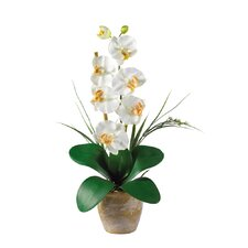 <strong>Nearly Natural</strong> Phalaenopsis Silk Orchid Arrangement in Cream
