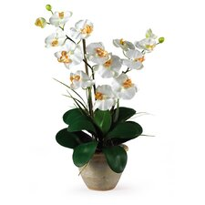 <strong>Nearly Natural</strong> Double Phalaenopsis Silk Orchid Arrangement in Cream