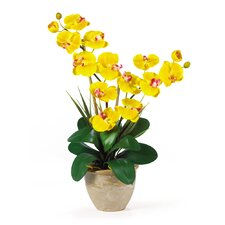 Double Phalaenopsis Silk Orchid Arrangement in Yellow