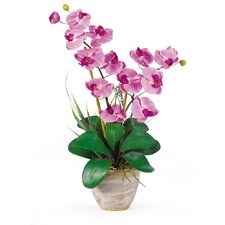 Double Phalaenopsis Silk Orchid Arrangement in Mauve