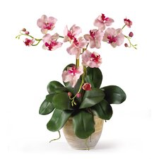 <strong>Nearly Natural</strong> Triple Mini Phalaenopsis Silk Orchid Arrangement in Pink White